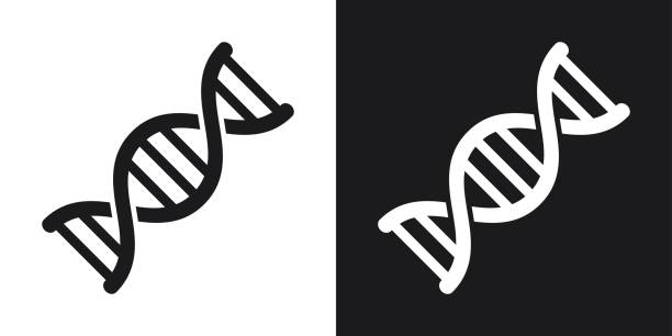 Top Dna Clip Art Vector Graphics And Illustrations IStock Marvelous.