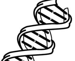 Dna clipart black and white » Clipart Station.