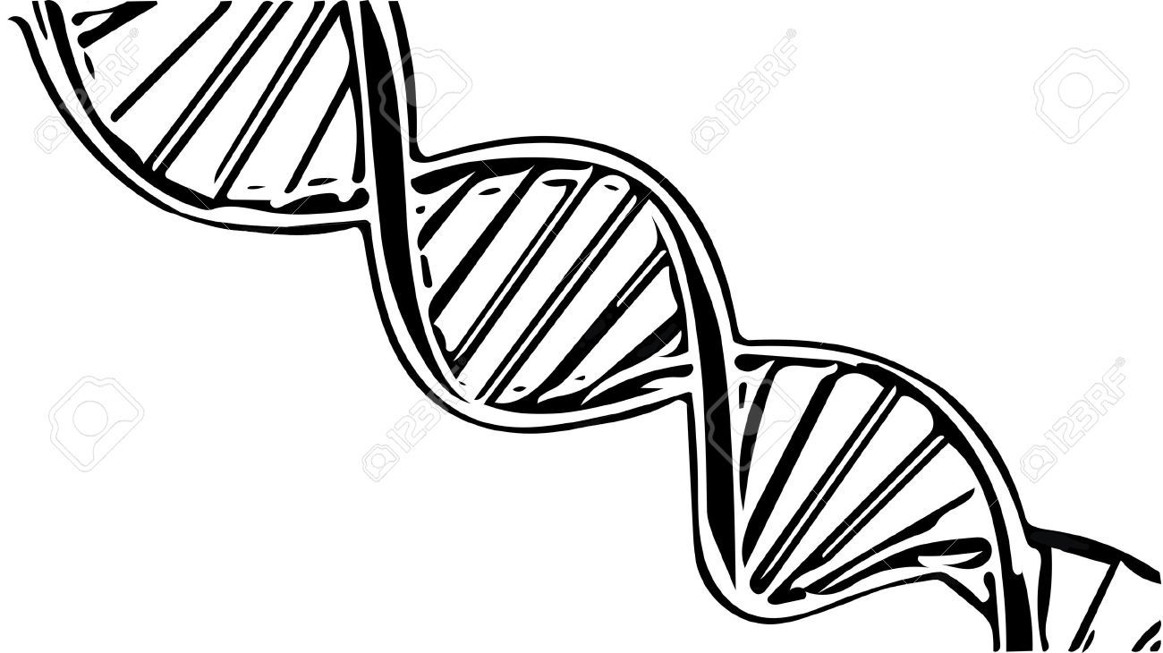 Black and white dna clipart 4 » Clipart Portal.