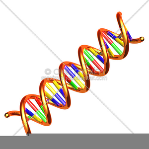 Dna Clipart Free.