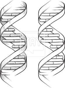 DNA double helix sketch.