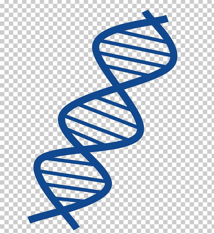DNA Nucleic Acid Double Helix PNG, Clipart, Area, Dna, Dna.