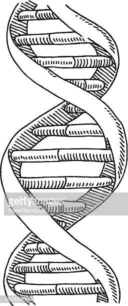 60 Top Double Helix Drawing Stock Illustrations, Clip art, Cartoons.
