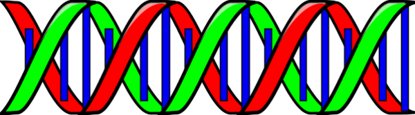 Free Dna Helix Clipart, Download Free Clip Art, Free Clip.