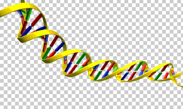 DNA Nucleic Acid Double Helix PNG, Clipart, Clipart, Clip Art, Dna.