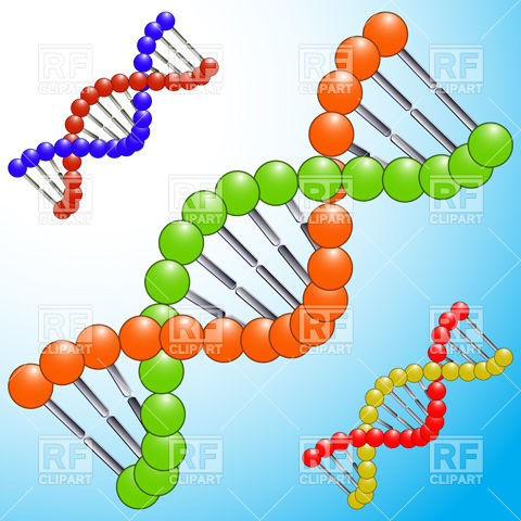 DNA molecule Stock Vector Image.