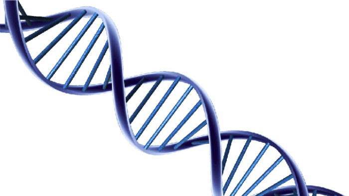 Png Dna Clipart Freeuse Download Dna Png Vector, Clipart, PSD.