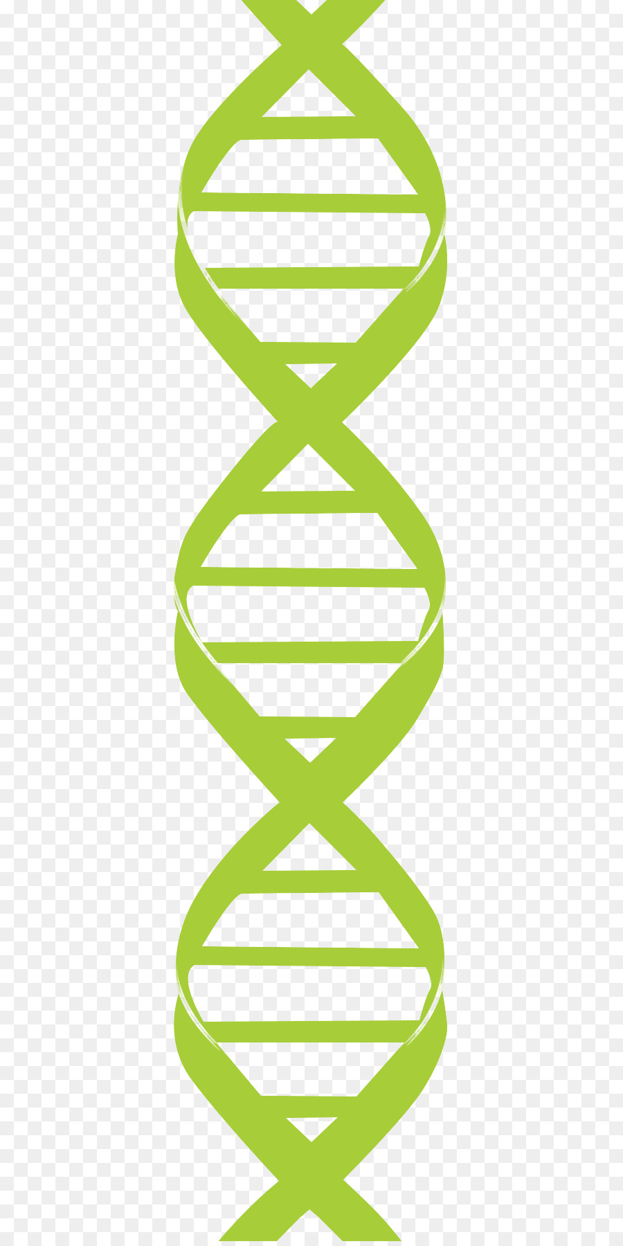 Clip art Nucleic acid double helix DNA Genetics.