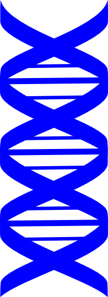 Blue Dna Strand Clip Art at Clker.com.