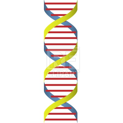 Dna strand Vector Image.