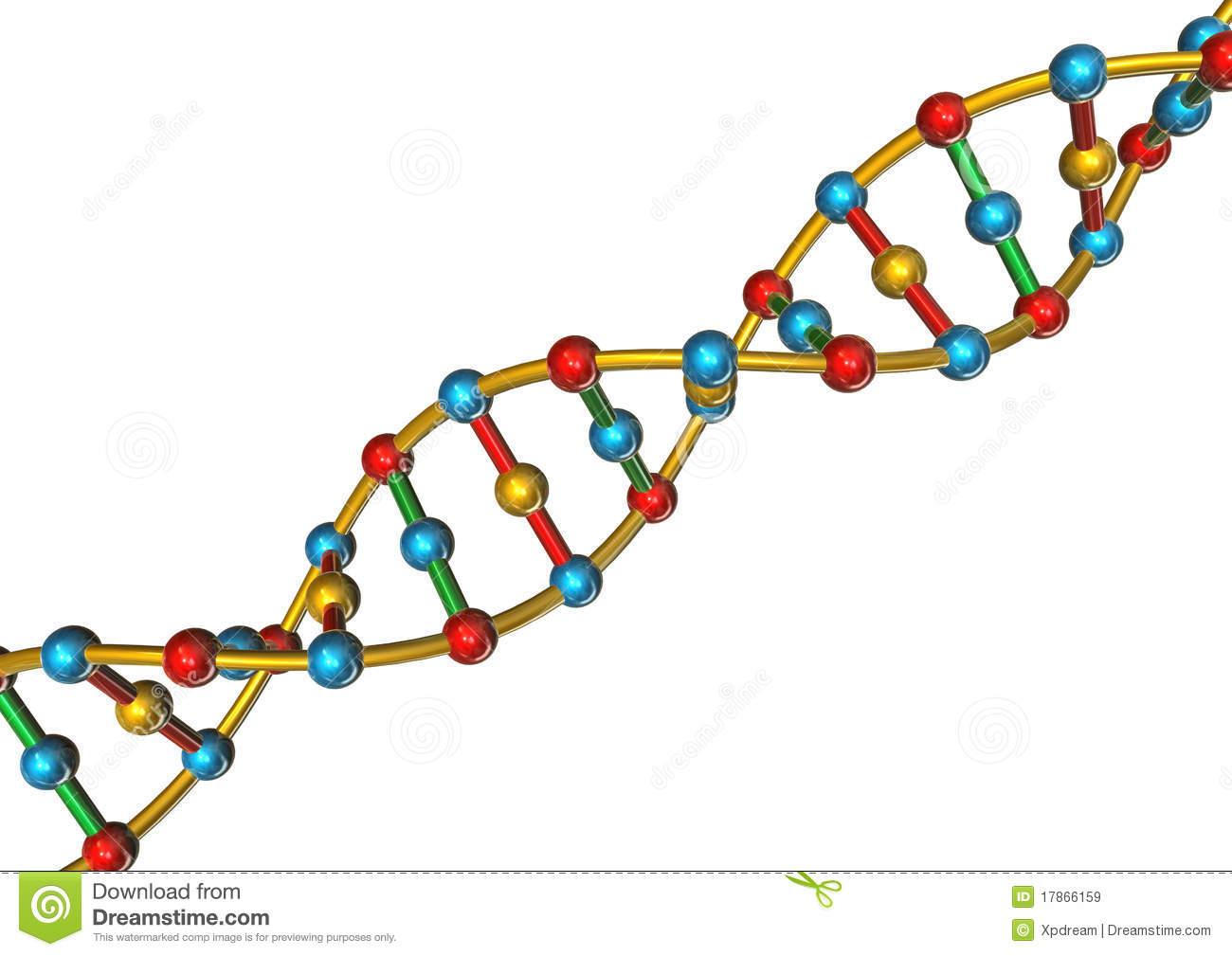 Simple dna strand clipart collection.