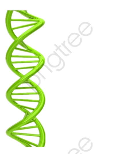 14 cliparts for free. Download Dna clipart dna chain and use in.
