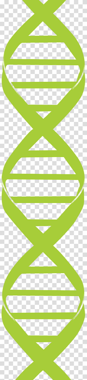 Gene DNA Helix, Chain gene transparent background PNG clipart.