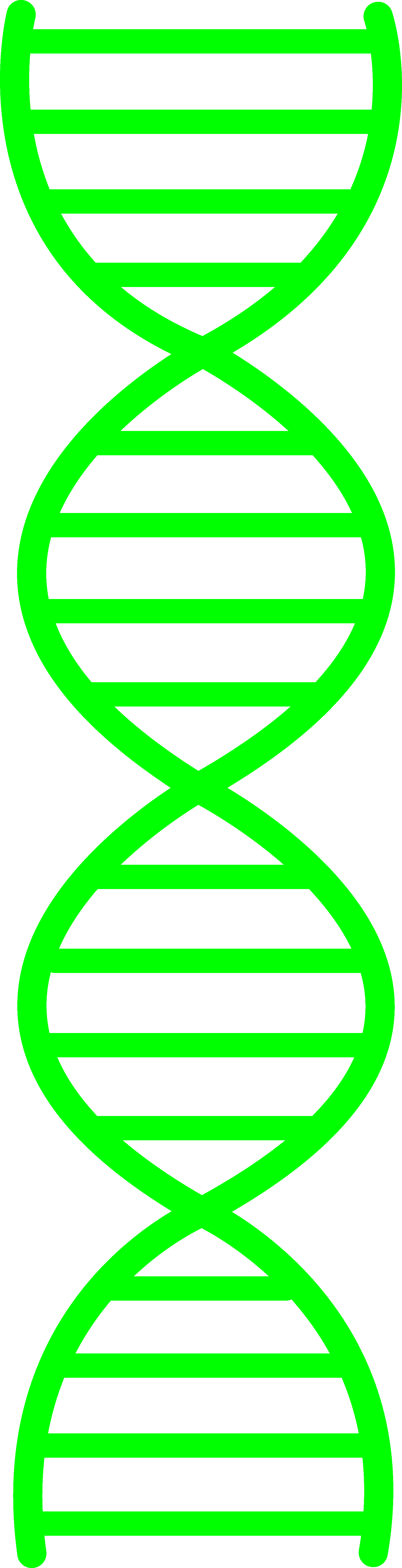 Dna Clipart Png.