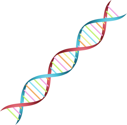 Dna Strand Png (105+ images in Collection) Page 3.