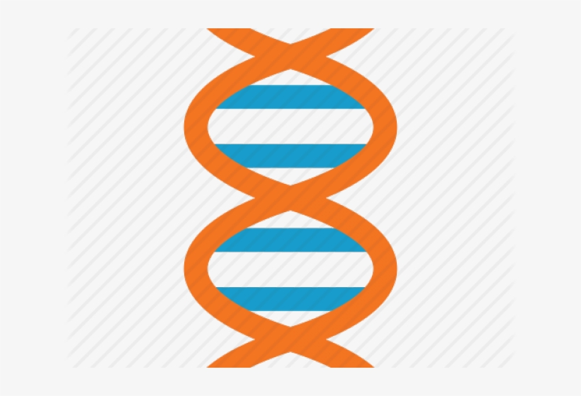 Dna Structure Clipart Dna Strand.