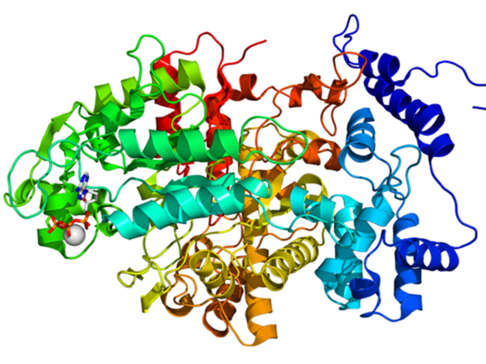 Princeton Researchers Construct Wholly Artificial Proteins That.