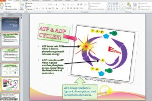 Do you have to cite clipart » Clipart Station.