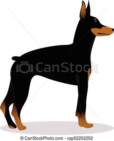 Doberman Pinscher dog.