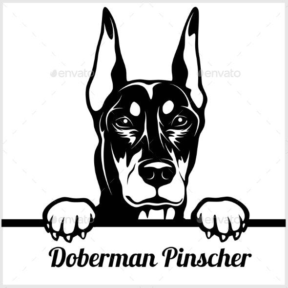 Doberman Pinscher Face.