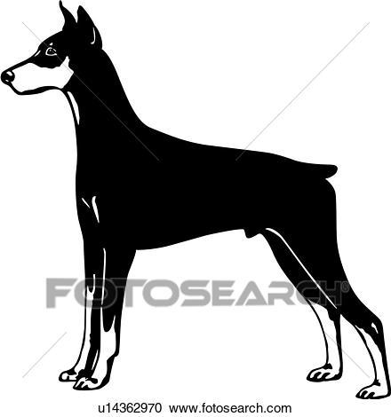 , animal, breeds, canine, doberman pinscher, dog, show dog, Clipart.
