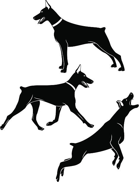 Best Doberman Pinscher Illustrations, Royalty.