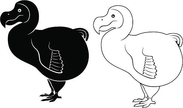 Best Dodo Bird Illustrations, Royalty.