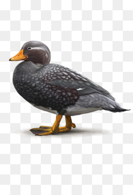 Dodo png free download.