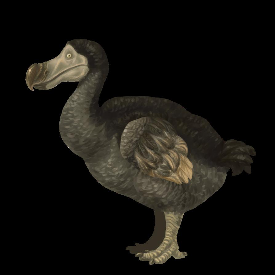 PNG Dodo Transparent Dodo.PNG Images..