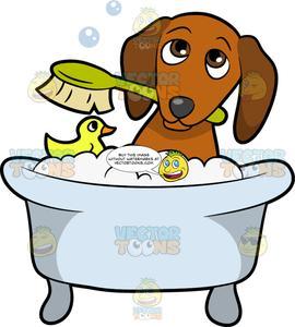 A Shy Dog Taking A Bath.