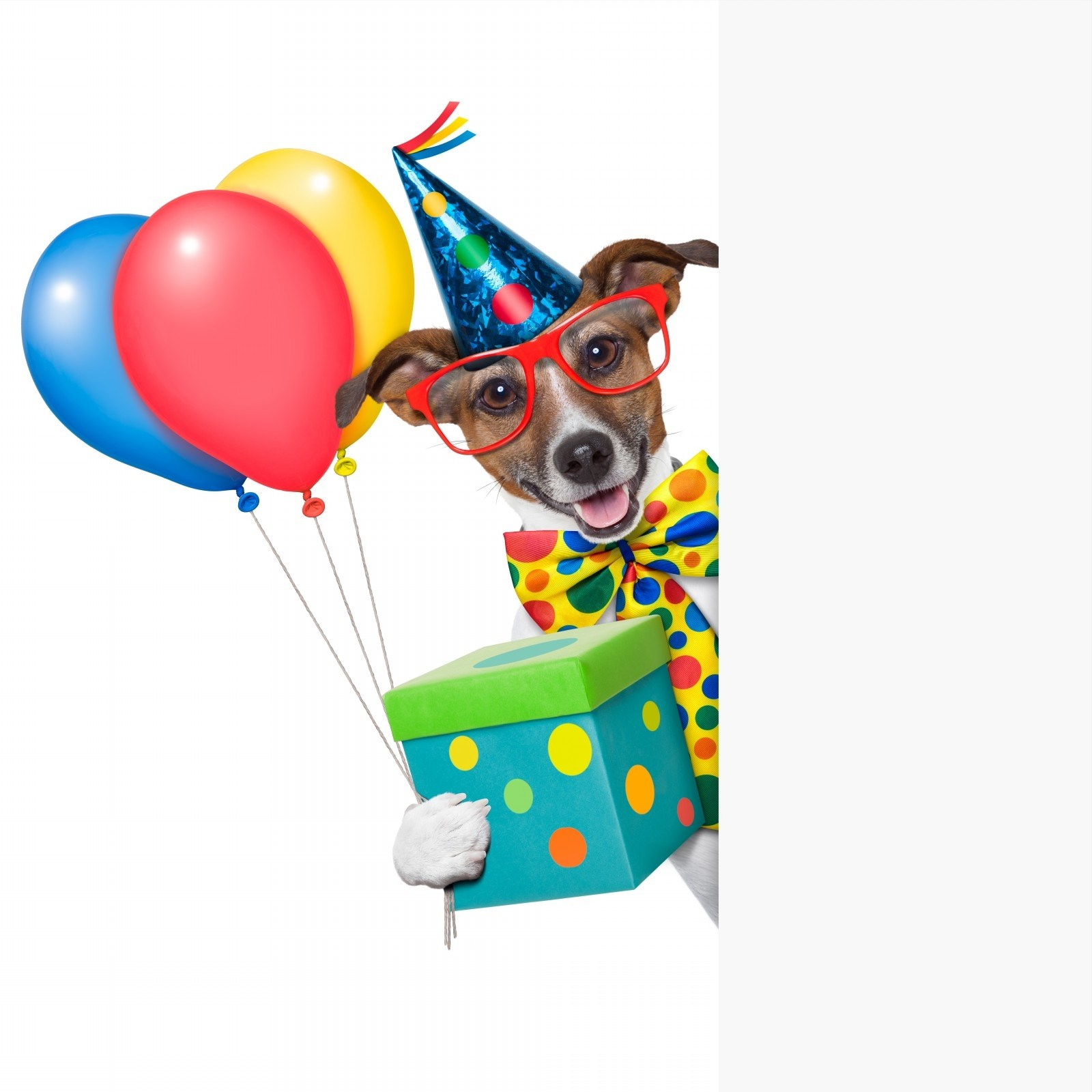 Dog birthday clipart 7 » Clipart Portal.