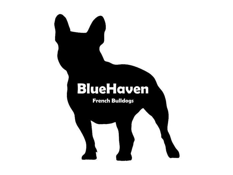 Why a French Bulldog?.