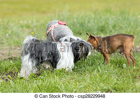 Stock Photo of Dog meeting outdoors.