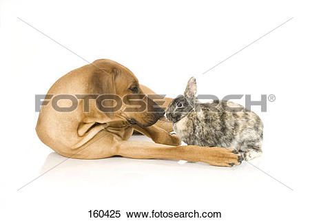 Stock Image of animal friendship: dog and a dwarf rabbit.