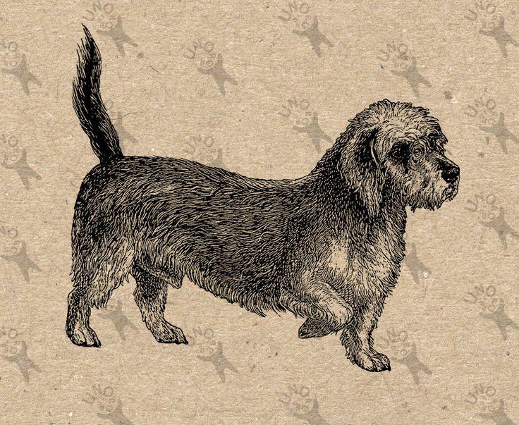 1000+ ideas about Dandie Dinmont Terrier on Pinterest.
