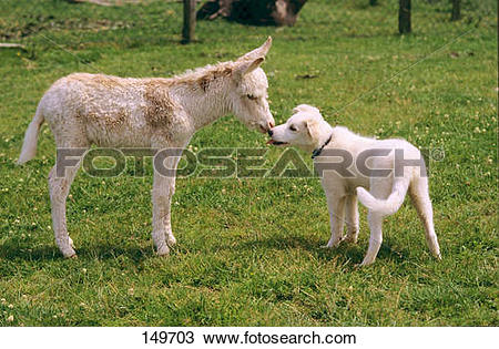 Stock Photo of animal friendship : young dwarf donkey and young.