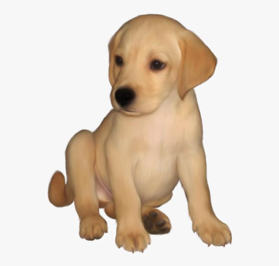 Retriever Puppy, Entourage, Labs, Digital Art, Photoshop.