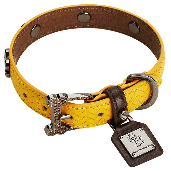 Collar,Dog collar,Yellow,Fashion accessory,Belt,Strap,Leash,Leather.