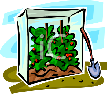 Royalty Free Clipart Image: Tomatoes Growing in a Small Greenhouse.