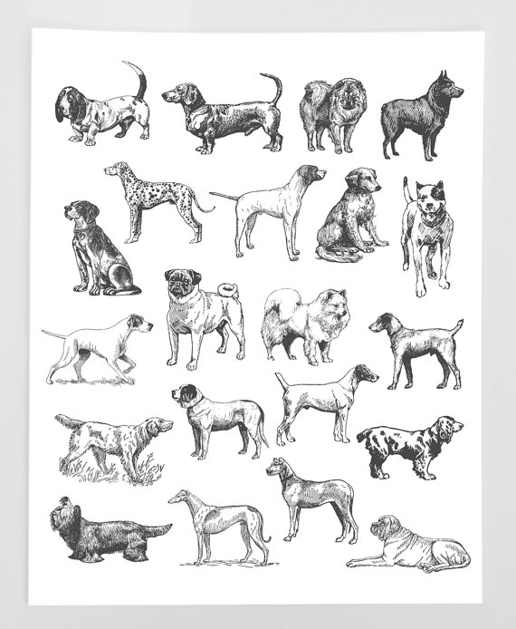 Hand Drawn Dog Clipart, Pet Dog Vintage Clipart Clip Art PNG.