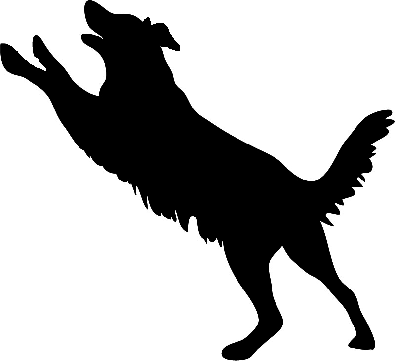 Dog Jumping Through Hoop Clip Art Car Pictures.
