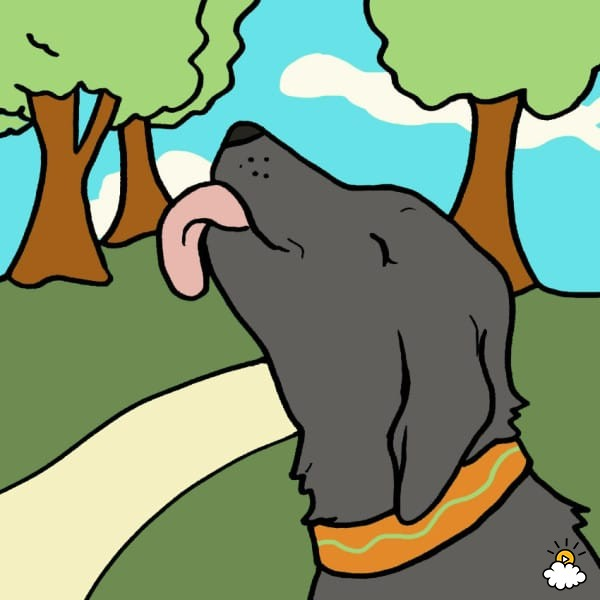 Why Do Dogs Lick Everything?.