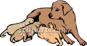 Mother_Dog_with_Her_Pups_Royalty_Free_Clipart_Picture_090104.