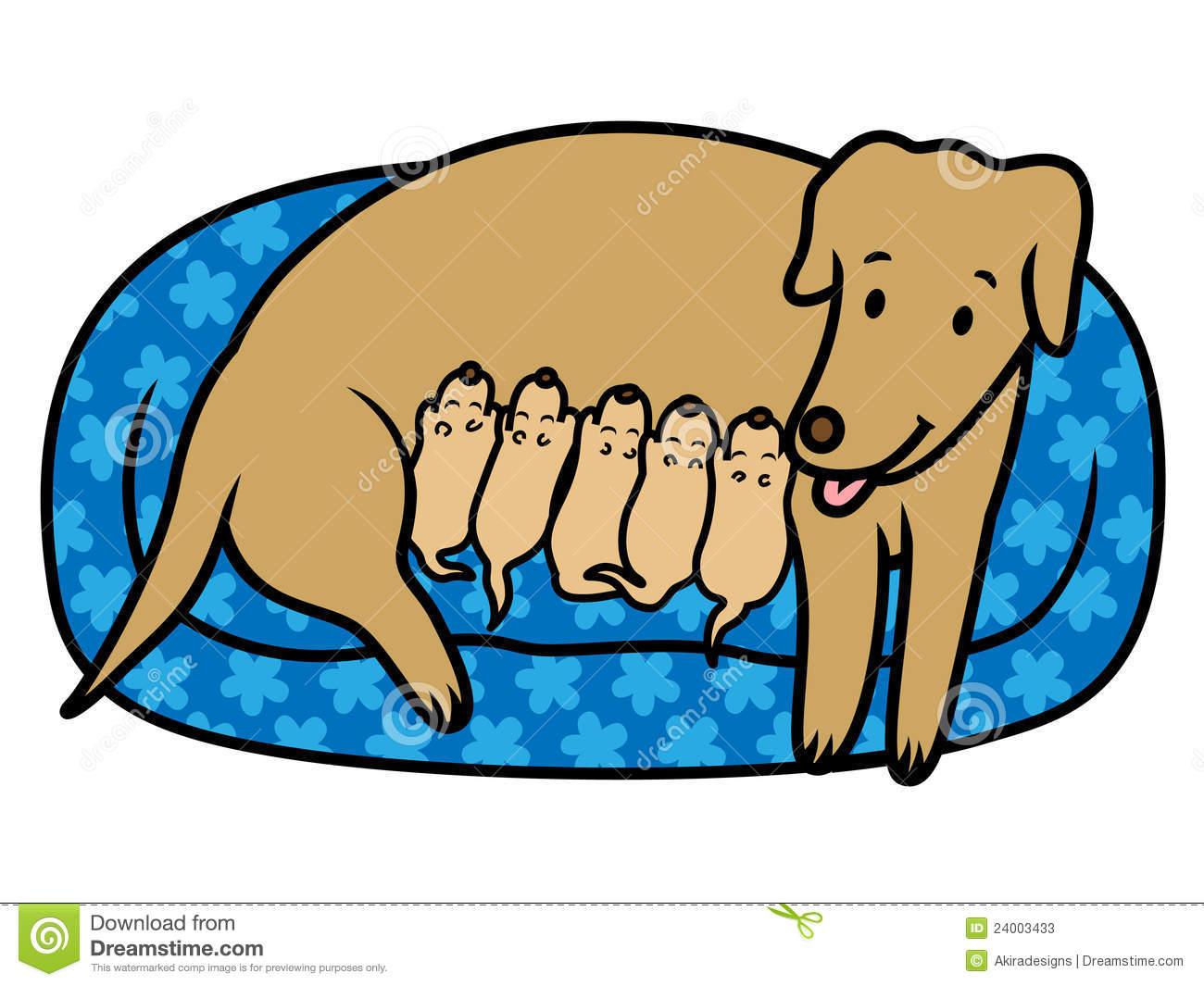 Female Dog Mother Breast Feeding New Born Puppies Stock Photos.