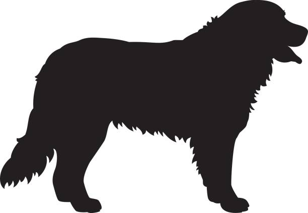 Best Bernese Mountain Dog Illustrations, Royalty.