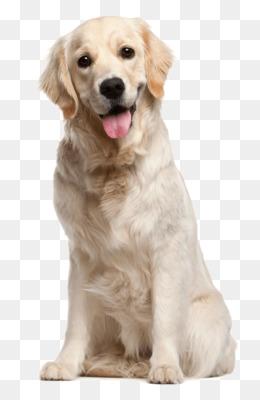 Dog PNG.