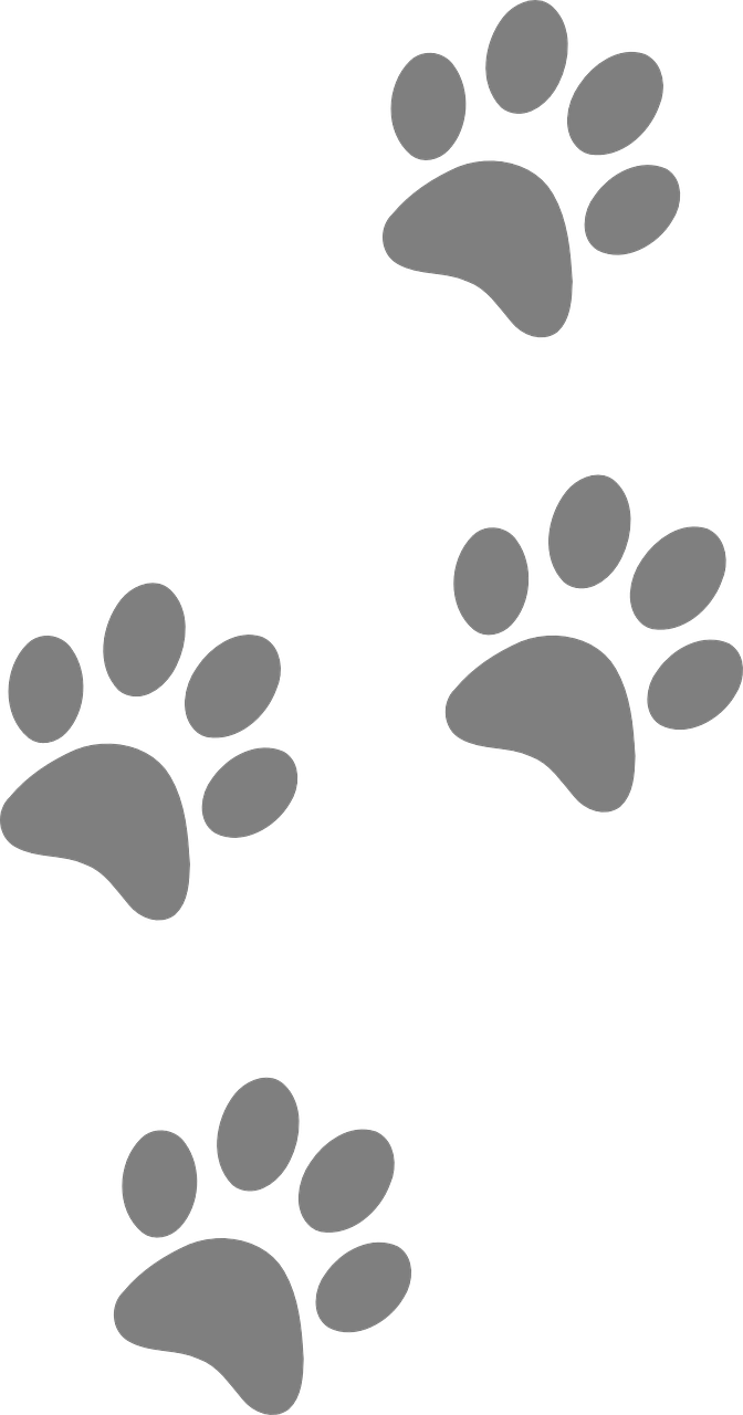 Footprints Animal Dog Paw Cat PNG.