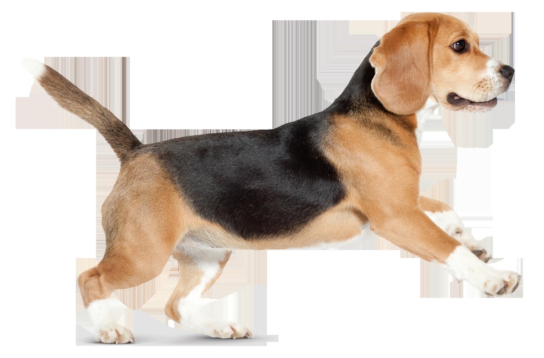 Dog PNG #50721.