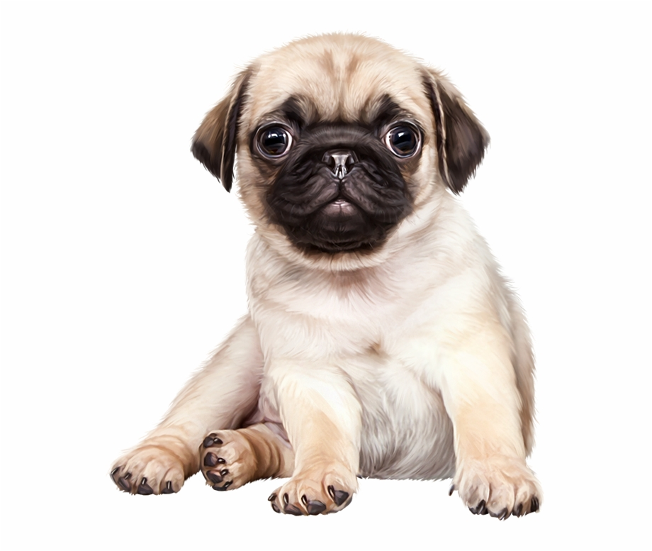 Pug Png Transparent Background.