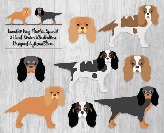 Cavalier King Charles Spaniel Clipart Toy Dog Illustration.
